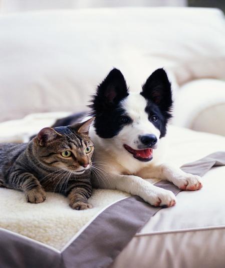 pension chien honfleur