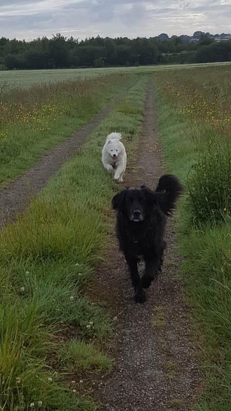 pension chien ille et vilaine