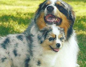 pension chien indre et loire