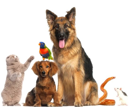 pension chien jonquiere