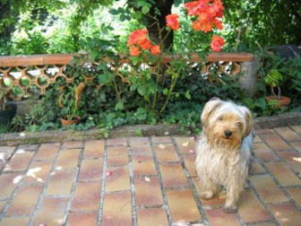 pension chien marignane