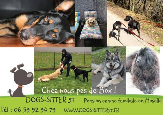 pension chien moselle