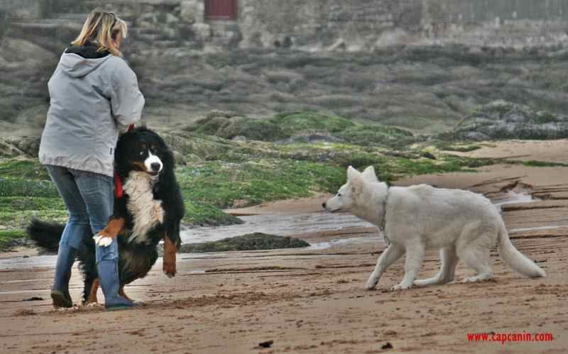 pension chien muret