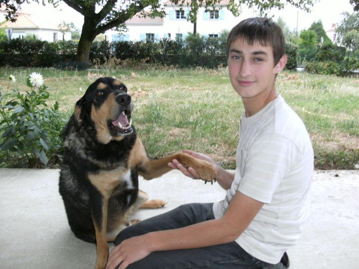 pension chien nantes