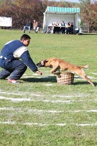 pension chien noyers bocage