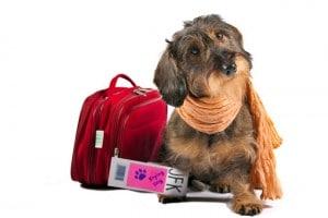 pension chien oberhaslach