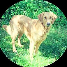 pension chien perthes en gatinais
