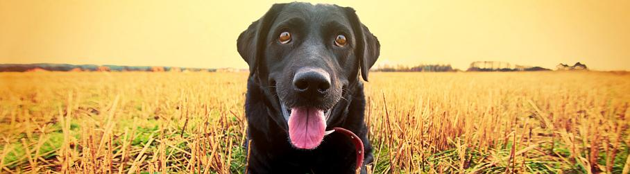 pension chien querenaing