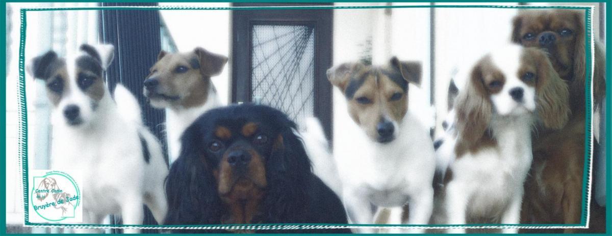 pension chien roanne