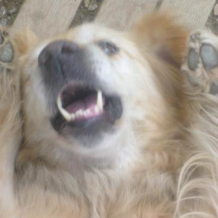 pension chien rosporden