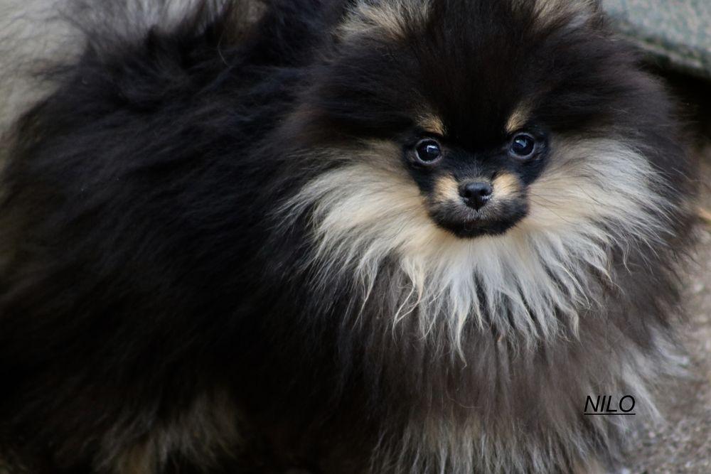pension chien rupt sur moselle