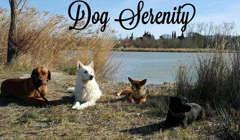 pension chien salon de provence