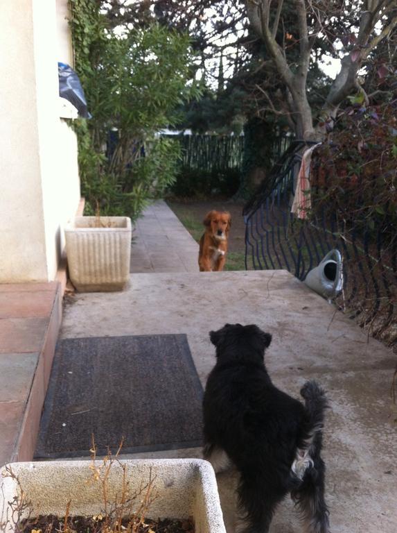pension chien senas