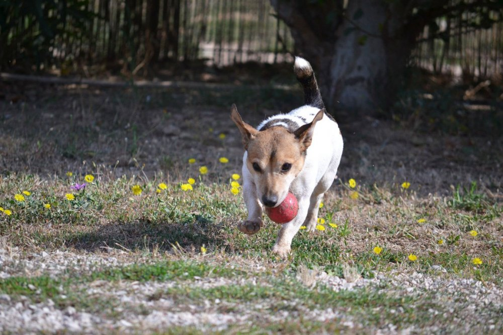 pension chien sete