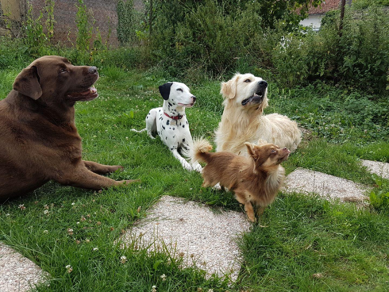 dressage chien somme