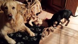 pension chien spa