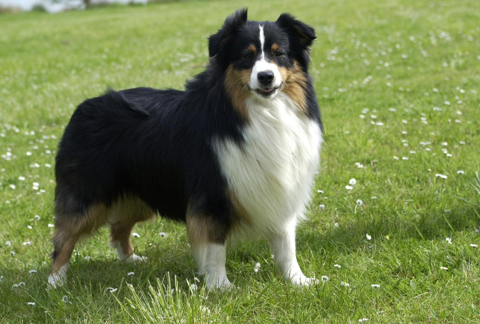 pension chien thionville