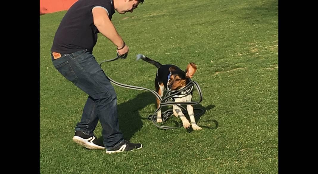 pension chien toulon