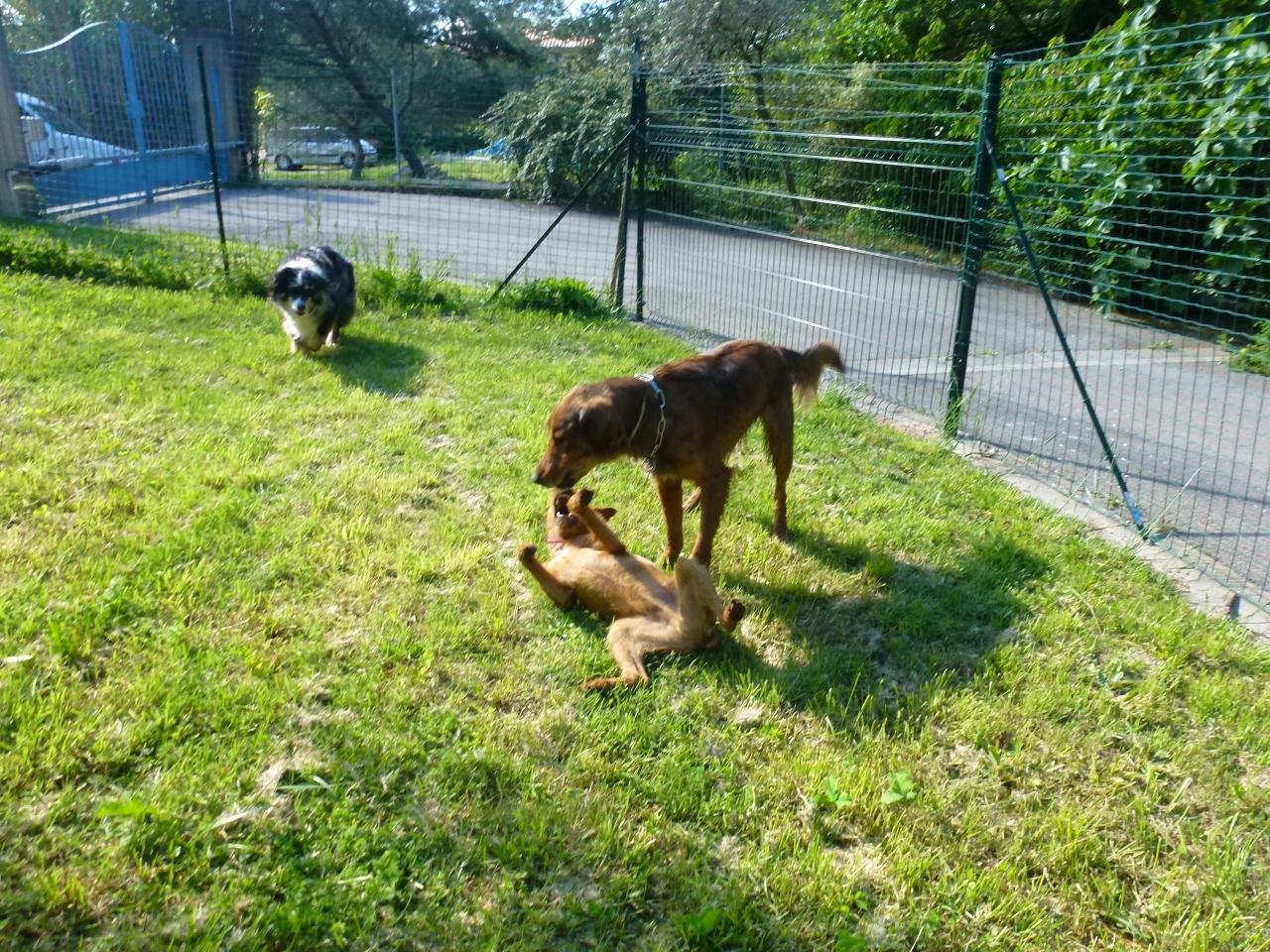 pension chien velaux