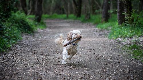 pension chien vence