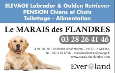 pension chien wallers