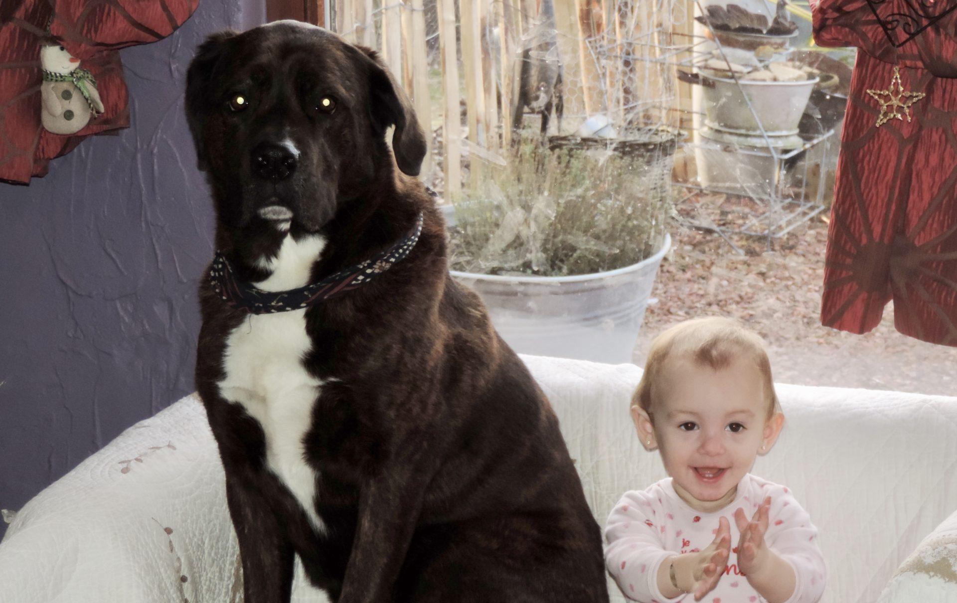 pension chien wasseige