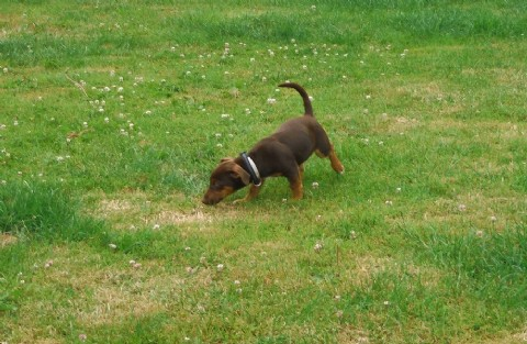 pension chien waterloo