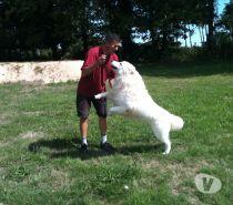 pension chien yakari