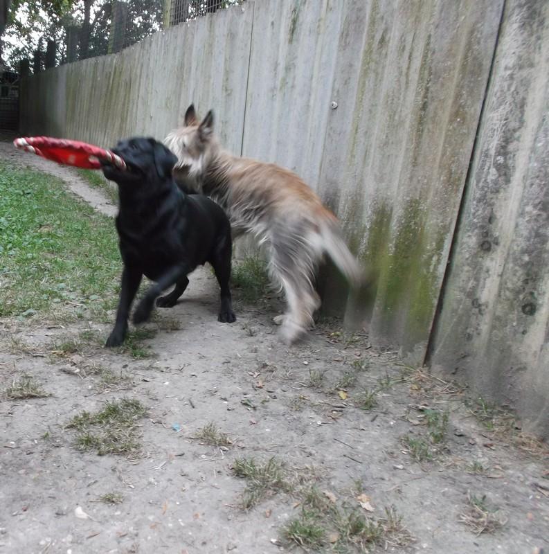 pension chien yvelines