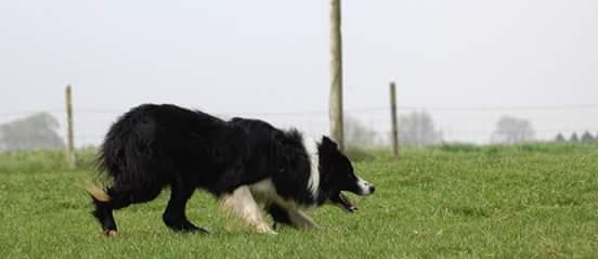 pension chien zuytpeene