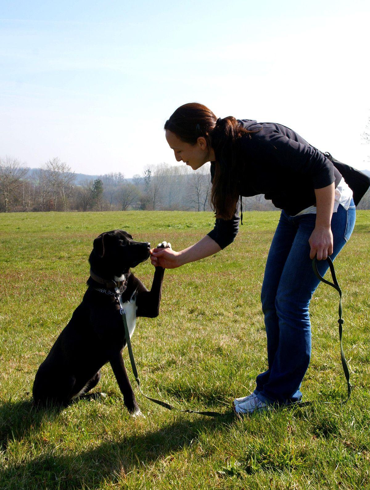 pension pour chiens drusenheim